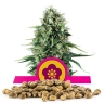 Power Flower Bulk Seeds