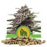 Royal Gorilla Automatic Bulk Seeds