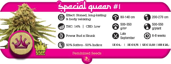 Buy Cheap Special Queen cannabis seeds online