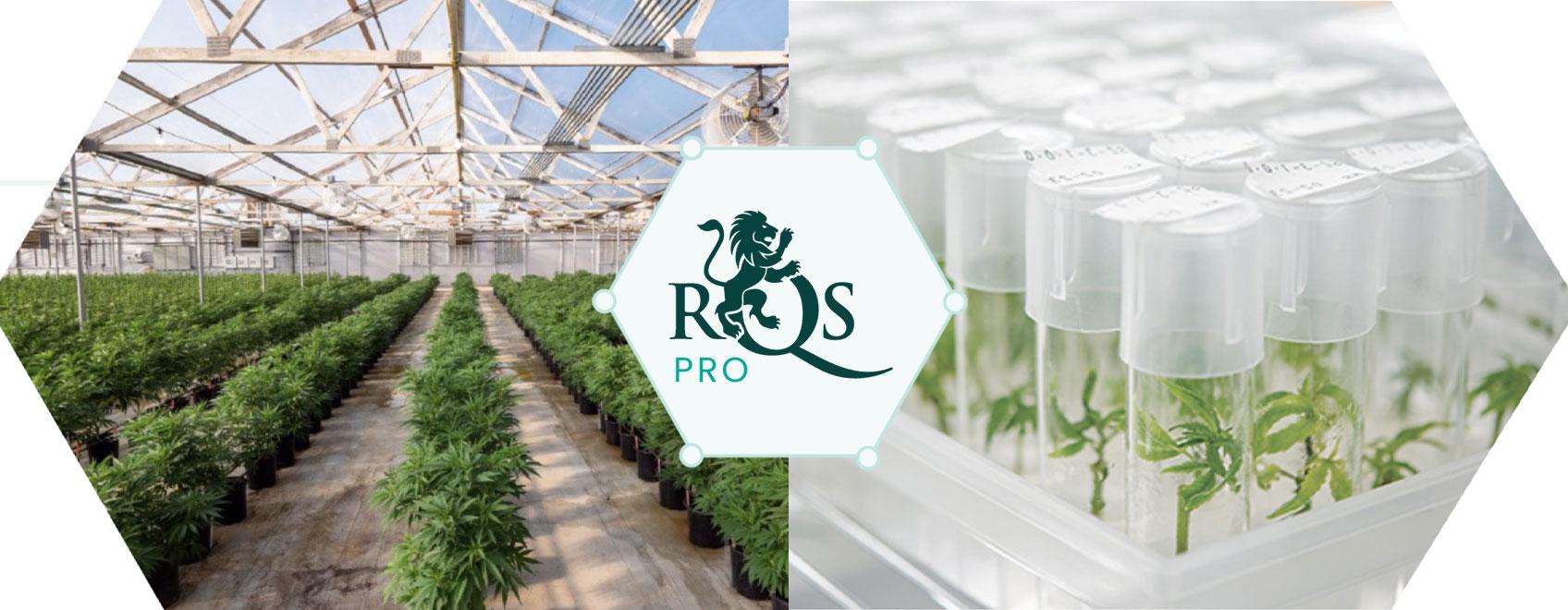 RQS Pro: Lideramos a Inovação e o Desenvolvimento em Canábis