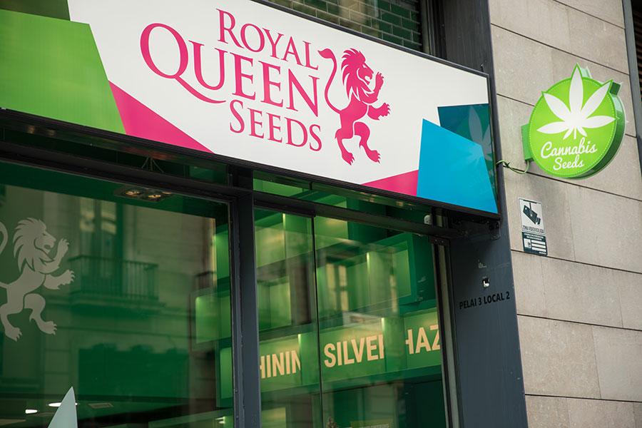 Nossa loja de Barcelona se especializará em oferecer aos growers nossas  sementes de primeira qualidade adb55c7c85947