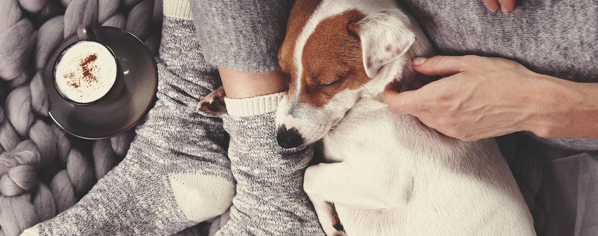 O que fazer se o seu cão consumir canábis?