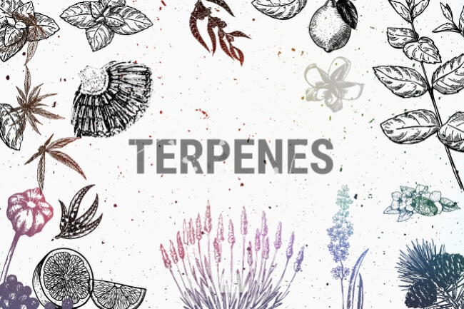 Terpenes, How They Work and their effects